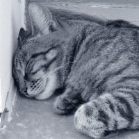 Он спит :: Дмитрий