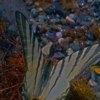 бабочка на царском селе-царская)) :: Роза Бара