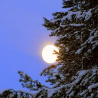 Среди безмолвия ночного - луна.. :: Галина Полина