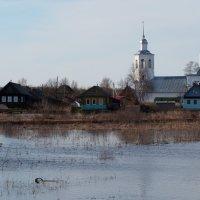 Разлив Северной Двины :: Сергей Михальченко