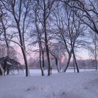 зимнее утро :: Елена