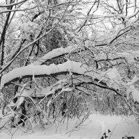Привалило снегу.. :: Андрей Заломленков