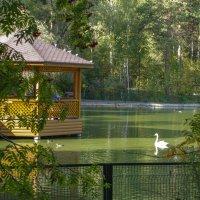 Новосибирский зоопарк :: Михаил Измайлов