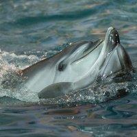 Дельфины :: Андрей Плеханов