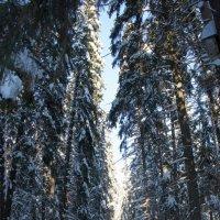 Зимние дорожки :: Евгений Персианов