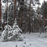 Снежность :: Виктор Четошников