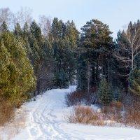 Зимняя дорога :: Константин Батищев