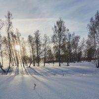 снежная зима :: Николай Мальцев