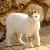кошка :: Александр Деревяшкин