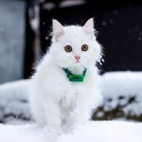 Увидев первый снег...:) :: Алёна