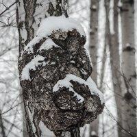 Медвежёнок :: Андрей Щетинин
