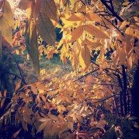 Осенняя листва :: mAri