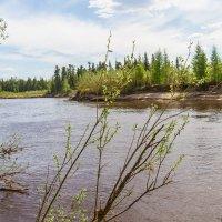 Река :: Дмитрий Сиялов