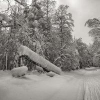 Зимняя дорога :: vladimir