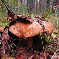 Скрываясь под листвой :: Андрей Снегерёв