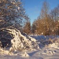 Зимний пейзаж с веткой :: Александра