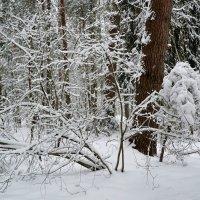 Снежный и холодный январь :: Милешкин Владимир Алексеевич