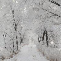 зима :: олеся