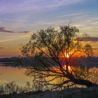 Закатное дерево :: Сергей Цветков