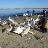 На анапском пляже :: Нина Бутко