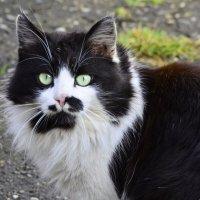 Соседский котик. :: Береславская Елена