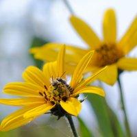 Пчёлы :: Vahe Dilanchyan
