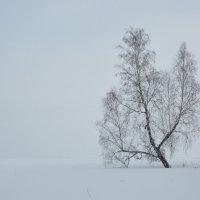 белое безмолвие :: Николай Мальцев