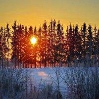 Закат за елками :: Валерий Талашов