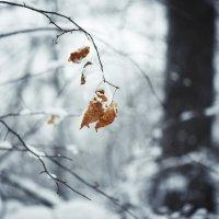 Одиночество :: Андрей Дыдыкин