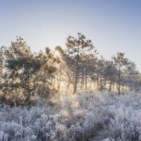 Мороз и Солнце :: Алина Шостик
