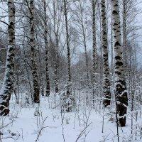 В зимнем лесу :: Катя Бокова