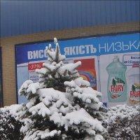 Мороз снежком укутал :: Нина Корешкова