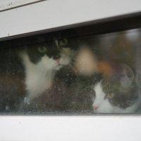 Две кошки :: Sony 2 Sony 2