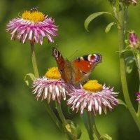 Бабочка и муха :: Михаил Измайлов