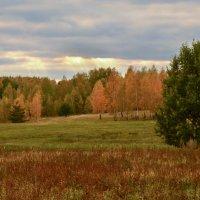 Про рыжую осень :: Лариса Березуцкая
