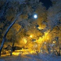 Луна задремала в седых космах старого тополя :: Екатерина Торганская