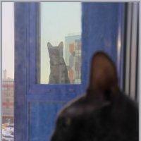 И на кошек — ноль внимания. Вот это воспитание! :: Сергей Андриянов