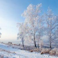 Мороз и солнце, день прекрасен... :: Анатолий Иргл
