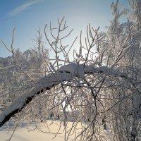 Пейзажи января.. :: Андрей Заломленков