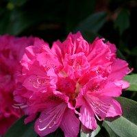 Ботанический сад Нагоя Higashiyama :: Swetlana V