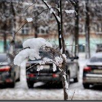 декабрь :: Юрий Ефимов