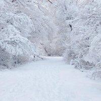 Зима. :: Игорь Бойко