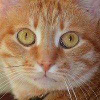 Эти глаза напротив... :: 4uika (Алла) Тарасова