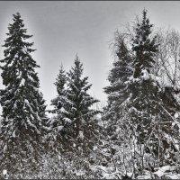 На старый Новый год :: Viktor Pjankov
