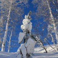 Холодно елочке холодно зимой. :: Сергей Адигамов