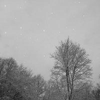 Прогулка в снегопад вблизи Павловска..... :: Tatiana Markova