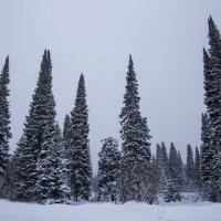 зимний лес :: lev