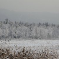 Зимнее серебро :: Alla Swan