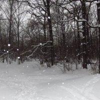 Ура! Гидрометцентр не ошибся: снег был :: Андрей Лукьянов