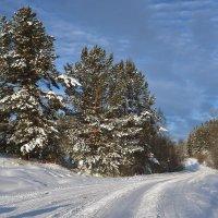 Дорога в лесу. :: Наталья